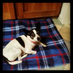 Miss Milly chillin out on her new picnic blanket