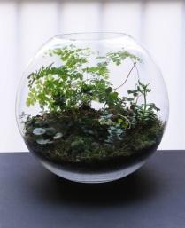 Round terrarium